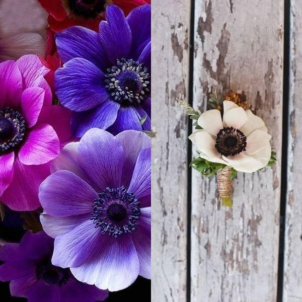 anemone (15)