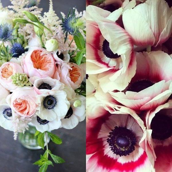 anemone (9)