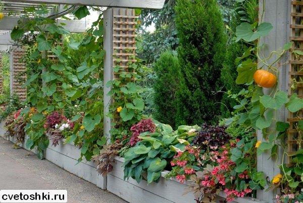 dekorativnaya-tykva (4)