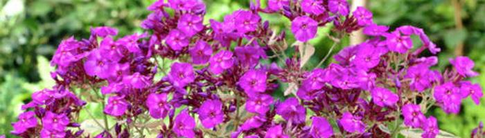 Photography gooseberry