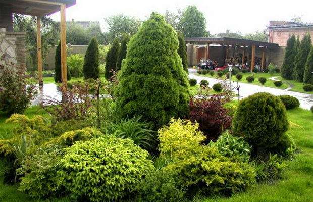 The Use Of Conifers In Landscape Design Flowers Project For
