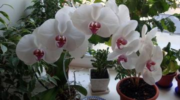 Черные жучки на орхидее как избавиться