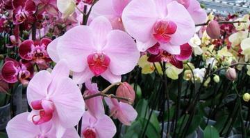 Болезни орхидей: описание и меры борьбы