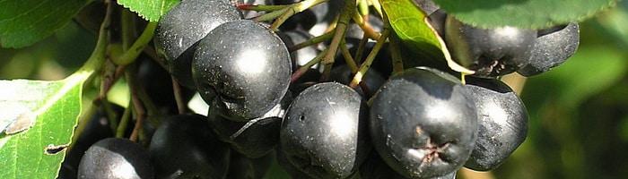 Препараты от вредителей плодовых деревьев и кустарников