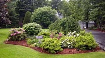 Какие цветы лучше посадить в саду и на даче: варианты для разных случаев