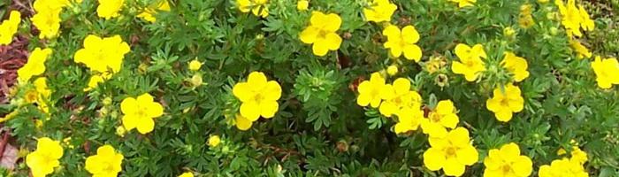 Цветок 65