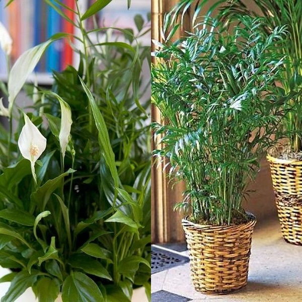 Продать вазу для цветов в