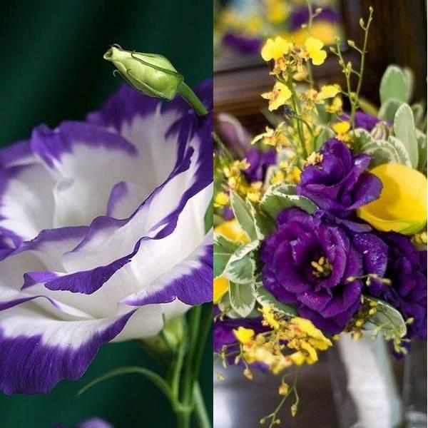 Эустома уход за срезанными цветами