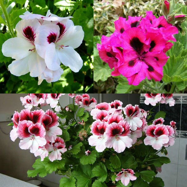 Плести цветы из бисера мастер класс