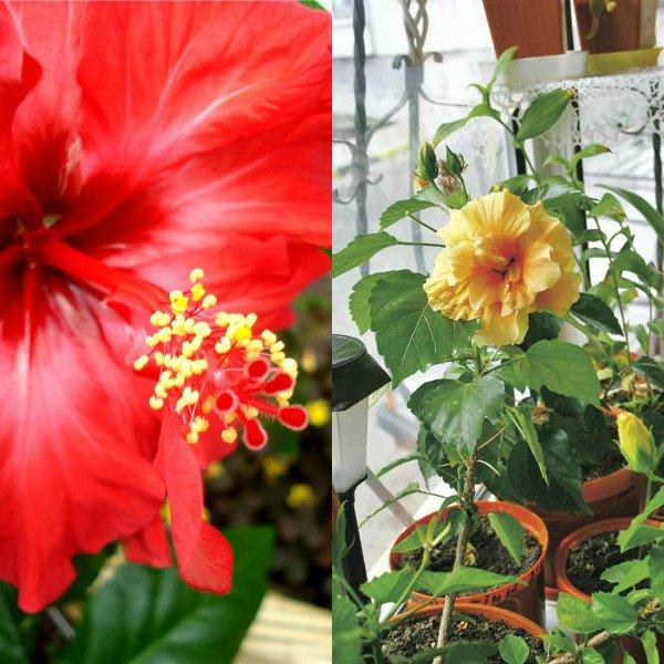 Горшки для цветов виды фото