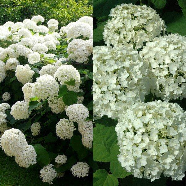 Фото цветы для милой
