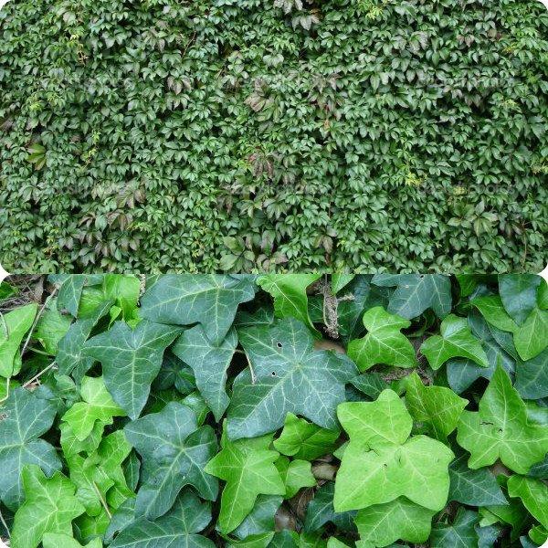 Садовые цветы с широкими листьями фото и названия