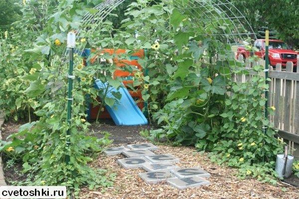 Плетистая тыква выращивание 90
