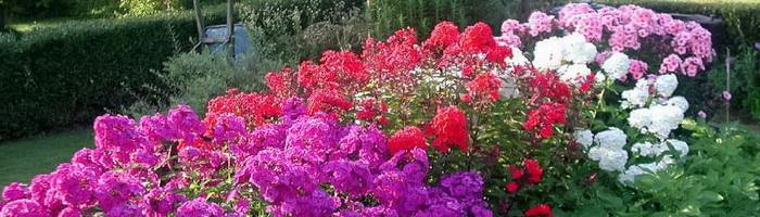 Mehrjahrige Blumen Phlox Foto Und Video Pflanzen Und Pflege Auf