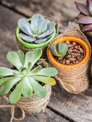 Комнатные растения кактусы и суккуленты: фото цветов, что это такое, как организовать их содержание