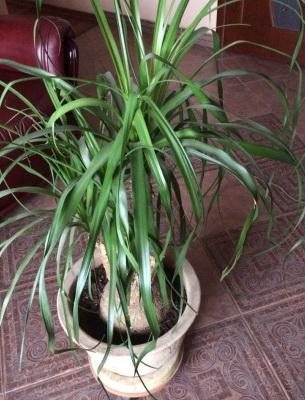 Комнатные растения с фото и названиями. Цветущие комнатные 5