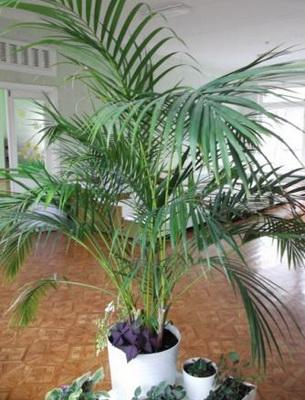 Комнатный цветок с длинными узкими листьями название фото