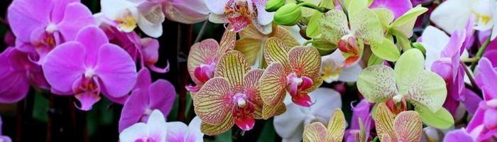 Wege Orchideen Wachsen Zu Lassen Und Zu Hause Zu Pflegen Fotos