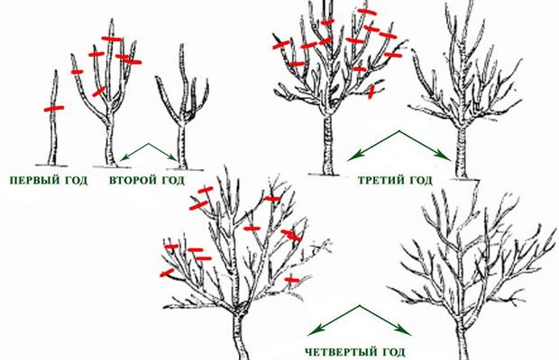 Beschneiden Die Bildung Der Krone Von Obstbaumen Im Fruhling Video